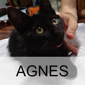 agnesadop