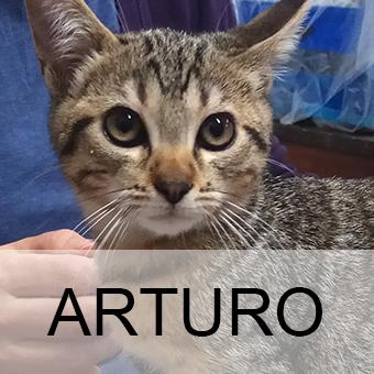 arturoadop
