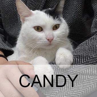 candyadop