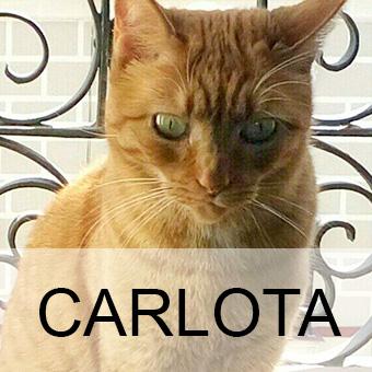 carlotaaadop