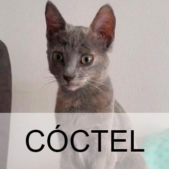 cocteladop