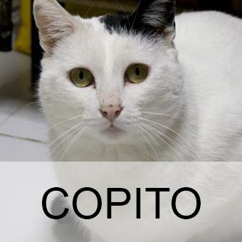 copitoadop