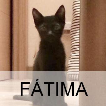fatimaadop