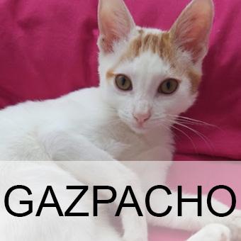 gazpachoadop