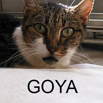 goyaadop