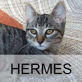 hermesadop