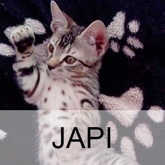 japiadop