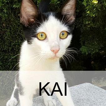 kaiadop
