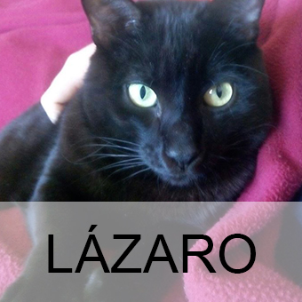 lazaroadop