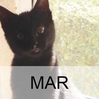 maradop