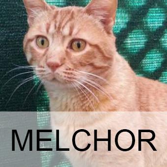melchoradop