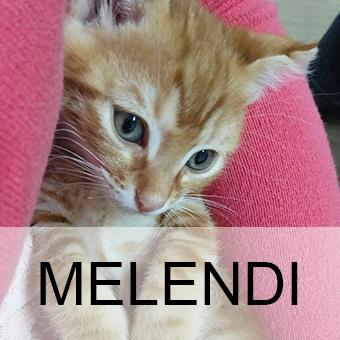 melendiadop