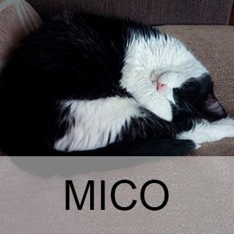 micoadop