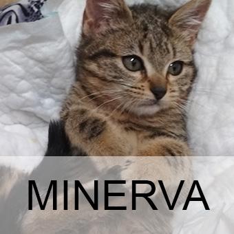 minervaadop