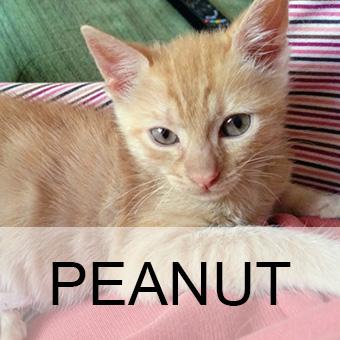 peanutadop