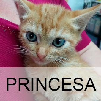 princesaadop
