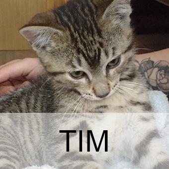 timadop