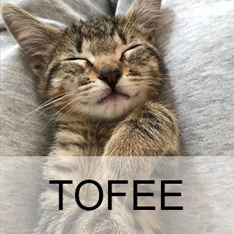 tofeeadop