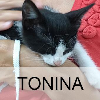 toninaadop