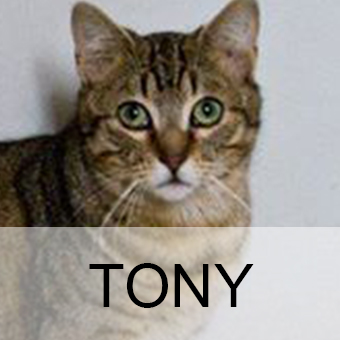 tonyadop