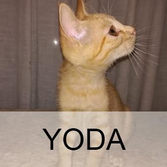 yodaadop