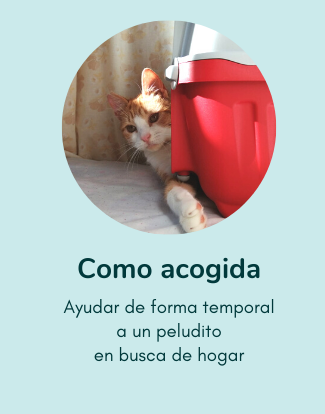 portada_welcome